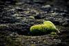 my green heart (B. Blue) Tags: grün heartshaped pflanzen material smileonsaturday moos stein herzform moss stone