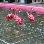 Pink Flamingo in the pond at the Custard Factory thumbnail