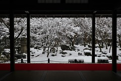Winter Silence  雪の京都 圓光寺 十牛の庭  (maco-nonch★R) Tags: buddhism canon eosm5 frame garden garten japanischer japon japanese japan japanesebuddhism kioto kyoto quiet snow snowfall snowy traditional traditionnel winter window scene tatami mousen famous 庭園 京都 圓光寺 manualexposure manualfocus manualwhitebalance throughherlens asia