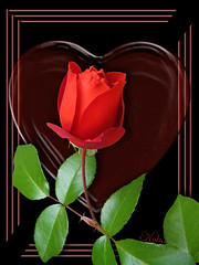 single rosebud for you all on Valentine's Day (Koko Nut, it's all about the frame) Tags: rose heart red geometric black romance hotcocoa valentine flower framedflower frame single bloom bud koko kokonut wonder