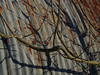 light and shadows (brian teh snail) Tags: nissen rust tree shadow curved