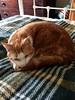 February 25 (MairéadNiRodaigh) Tags: cats blanket