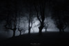 Takhisis reign (Mimadeo) Tags: scary dark fog night forest nightmare horror mood moody atmosphere atmospheric monochrome blue landscape magic tree shadow light evening mystery mist spooky foggy darkness misty halloween woods evil creepy fantasy gothic mysterious silhouette enchanted ghost moonlight haunted eerie black white blackandwhite