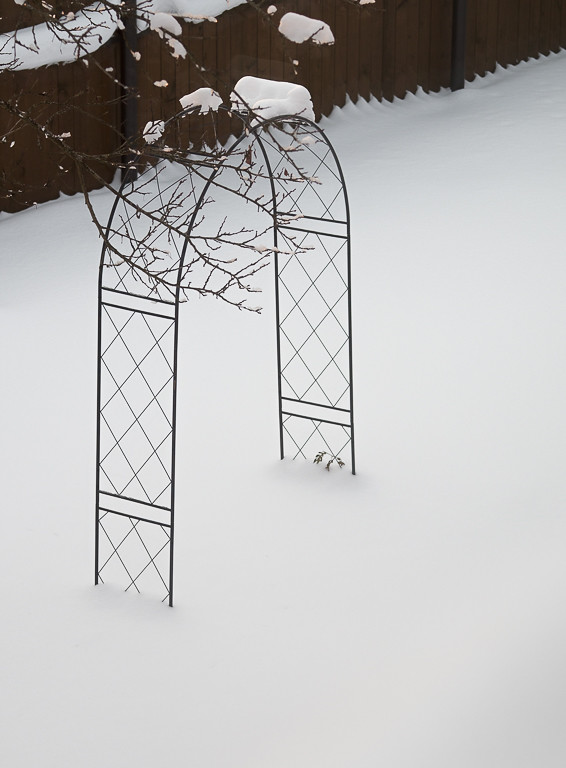 фото: Triumph of winter