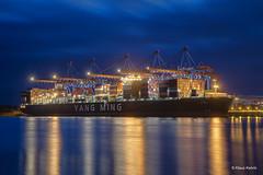Yang Ming - 02011801 (Klaus Kehrls) Tags: hamburg hamburger hafen schiffe containerschiffe containerbrücken cta nachtaufnahme wasser stadt himmel boot gebäude
