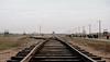 Auschwitz II–Birkenau, Oświęcim (Rachel Katherine Sulek) Tags: poland krakow pinta bar europe oświęcim auschwitz auschwitzbirkenau history explore travel sony