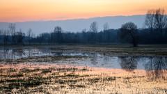 4__.jpg (Nu Mero) Tags: coucherdesoleil paysage innondation grandried nature leverdesoleil ried sunrise sunset muttersholtz grandest france fr