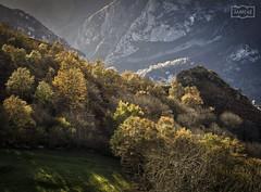 Bosquecillo/  Copse (Jose Antonio. 62) Tags: spain españa asturias paraisonatural nature naturaleza trees arboles landscape paisaje amieva