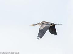 _DS57238.jpg (WaterDragon3) Tags: longreef birds
