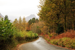 Mist and Drizzle (maureen bracewell) Tags: lakedistrict autumn landscape mist road trees cumbria england uk drizzle wet rain autumncolour bracken nature maureenbracewell cannon keswick