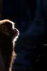 Japanese Macaque (BrianEden) Tags: wildlifephotography portrait northfork longislandaquarium wildlife aquarium macaque longisland newyork dramatic japanesemacaque riverhead snowmonkey light unitedstates us