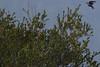 IMG_3379 (armadil) Tags: edgewoodpark bird birds bluebird bluebirds