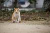 尾道ねこ (hs_8585) Tags: pentax k3ii da50135mmf28 hiroshima onomichi 広島 尾道 cat