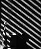 Light, shadow and a toothbrush (dr_scholz@ymail.com) Tags: light shadow lightandshadow toothbrush contrast diagonal stripes shutter pattern canon5dmkii milvus2100m milvus1002ze zeissmilvus2100m