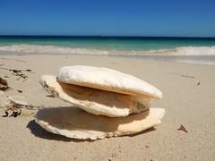 Cuttlefish (Clare-White) Tags: shells sea sand 3 blue jurienbay wa beach australia smileonsaturday stacked matchpointwinner mpt607