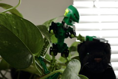 The taming of the houseplant panther (Toa Slim 2014) Tags: lewa bionicle lego afol toy toa mata photography