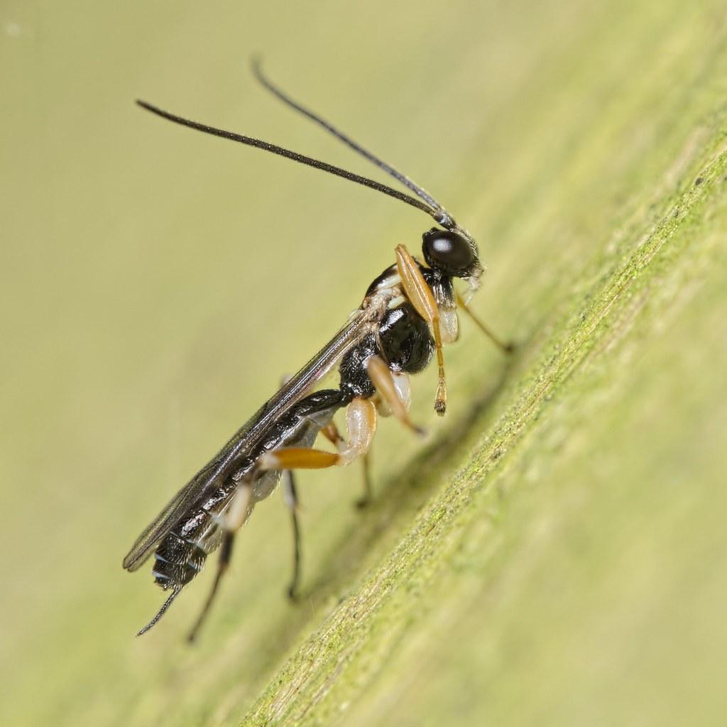 The Phylum Arthropoda