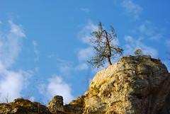 184 I grow on a rocky ground (Hejma (+/- 5400 faves and 1,7 milion views)) Tags: skały wapienne drzewo krzewy mchy niebieskie niebo