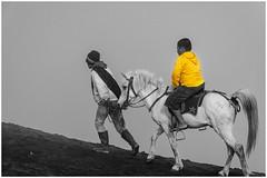 A cheval vers le Bromo ! (bertranddorel) Tags: cheval volcan bromo indonésie asie java montagne couleurselective couleur mono monochrome jaune yellow cendre nikon homme kid enfant