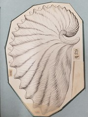 AMNH hackathon (juan tan kwon) Tags: amnh hackathon library biology science mouse geode trilobites