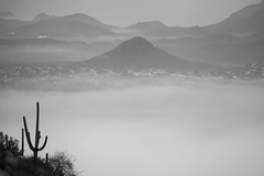 Tum025_small (patcaribou) Tags: tucson tumamochill sonorandesert fog cactii saguarocactus