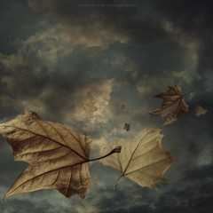 The leaving (emilioramos59) Tags: photomanipulation digitalart conceptual surreal leaves