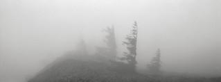 On Dog Mountain, Columbia River Gorge, Washington