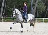 RAFALE DU COUSSOUL DE LA GESSE - H PSL - 2005 (HARAS DE LA GESSE) Tags: haras horse cheval lusitano lusitanien poulain pouliche foal