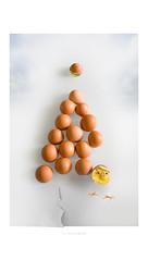 Buon Nat... ops! Buona Pasqua! (Fiorenzo Delegà) Tags: buonapasqua eggs uova pasqua easter happyeaster canon eos 550d canoneos550d fiorenzodelegà
