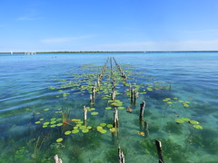 P1080378 (adnetsoma) Tags: bacalar quintanaroo mexico paraiso laguna maravilla panasonic