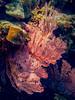 20171027-TG4-063a-Reef Prince Snorkel Tour-Aust_Geo_Flickr.jpg (Brian Dean) Tags: nature austgeo diving divingtour caravaning slideshow facebook 2017tour reefprince wa dive scuba flickr rowleyshoals photobookpending