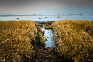 north sea coast in winter