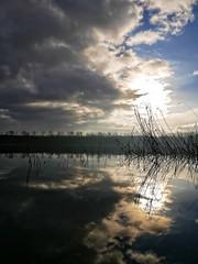 Wolkenspiegelung (Digitalsucher) Tags: schilf water horizon spiegelung wolken clouds digital lake nature natur sun sonne horizont panasonic leica summilux dg asph 15mm17 1517 15mm 17 15 mft m43 dmcg80 dmcg81 dmc85 g80 g81 g85 dslm csc