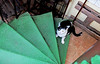 Prague (kirstiecat) Tags: methane environment science cat prague czechia feline meow kitty stairs green praha caturday