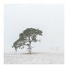 Solitaire Tree (jos.pannekoek) Tags: kalmthout heide tree snow winterscape winter d500 1755 nikkor1755f28 landscape belgium