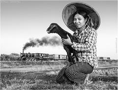 The Shepherdess (channel packet) Tags: myanmar burma steam train locomotive railway railroad shepherd goat sheep animals livestock agriculture girl monochrome davidhill