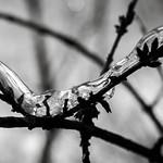 La tête dans les buissons thumbnail