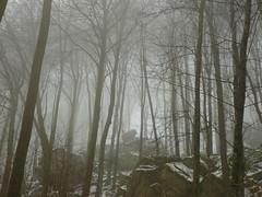 foggy forest (Jörg Paul Kaspari) Tags: irrel teufelsschlucht spaziergang wald fels felsen nebel winter schnee eifel südeifel naturpark foggy forest magic