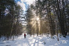 Snowbeams (Thousand Word Images by Dustin Abbott) Tags: 2018 sonya7riii sonyfe24105mmf4goss shaftsoflight woman sony review mirrorless snowshoeing snow dustinabbottnet thousandwordimages dustinabbott petawawa sonya7r3 fullframe forest pembroke camera ontario canada test photography comparison photodujour ca