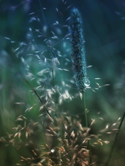 the essence (camerito) Tags: grass gras drop tropfen essence filigrane camerito nikon1 j4 flickr unlimitedphotos nature
