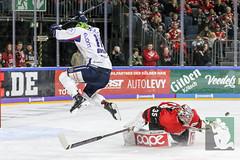 DEL2018-82.jpg (sushysan.de) Tags: bundesliga del deutscheeishockeyliga eishockey iserlohn iserlohnroosters kec köln kölnerhaie lanxessarena pix pixsportfotos roosters saison20172018 pixsportfotosde sushysan sushysande