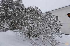 07. Зима в Святых Горах. Уборка снега 23.01.2018