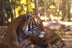 Naples Zoo (LeahDelPhotography) Tags: zoophotography animalphotography wildlifephotography animalphotographer animals wildlifephotographer wildlife florida travel zoo exoticanimals endangeredanimals naplesflorida nature naturephotography naturephotographer