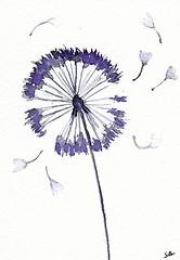 """Dandelion seeds"" by Sonia (Sonia Aguiar (Mallorca)) Tags: aceo watercolor watercolour acuarela aquarelle aquarell flower soniaaguiar smallart wildflowers wallart walldecor miniatureart atc"