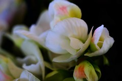 Macro (ameliapardo) Tags: macro macrodeflores macrodefloresyplantas macroespañol jardines airelibre naturaleza sevilla españa andalucia fujixt1