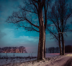 An icy quiet forlon II (Ingeborg Ruyken) Tags: ochtend morning dropbox 2017 empel trees bomen 500pxs dawn empelsedijk sneeuw natuurfotografie doornkampsteeg december flickr snow