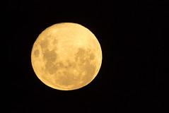 Moon (Daniel Talbot) Tags: auckland aucklandregion newzealand northisland teikaamāui autumn colours evening fullmoon lunar moon oceania onehunga season seasons space yellow