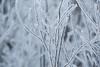 Frozen Bush (giantmike) Tags: cold frost frozen sticks winter bush weeds
