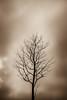 Solitude (jcleon1) Tags: 2018 arbre canal noiretblanc vignely paris coursdeau canaldelourcq capitale