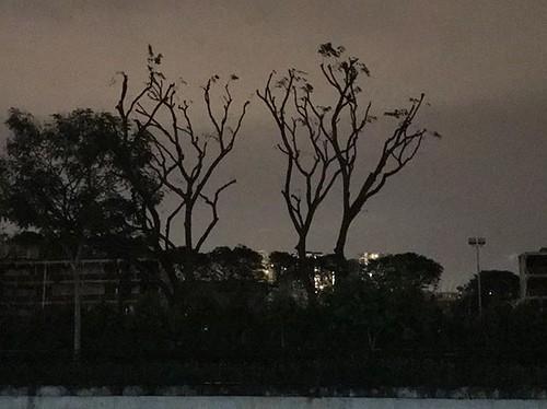 21°C nights in #Singapore. • #latergram #trees #lifeinthetropics